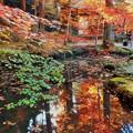 崑崗(こんこう)池の秋 in 大本山仏通寺