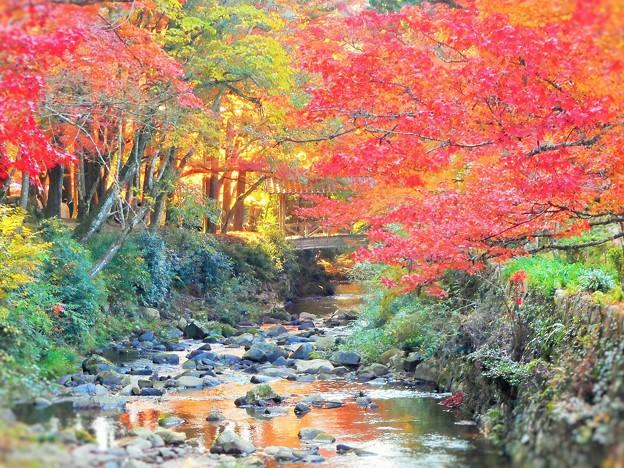 晩秋の仏通寺川(活龍水)のせせらぎ