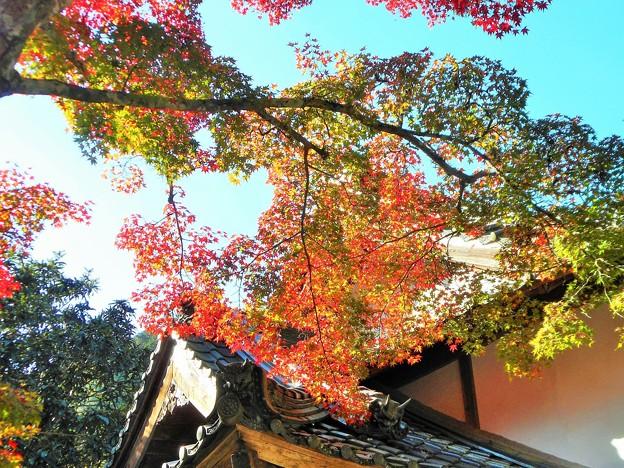 長松院の秋 in 大本山仏通寺
