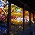 Photos: 仏通寺川(活龍水)の紅葉