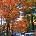 写真: 参道の紅葉 in 仏通寺
