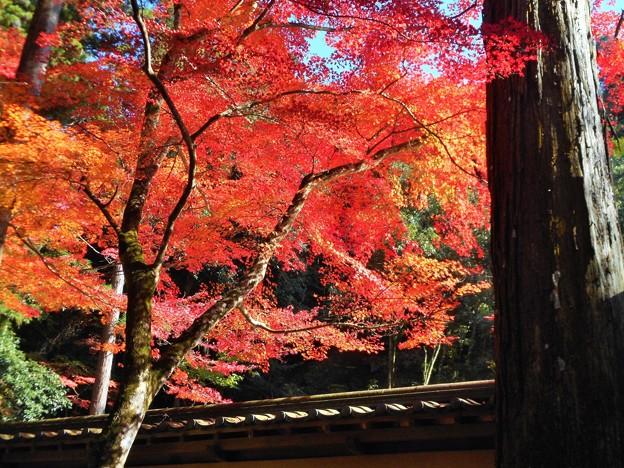 写真: 参道の紅葉 in 錦秋の仏通寺