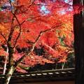 参道の紅葉 in 錦秋の仏通寺