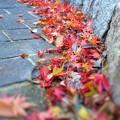 写真: 晩秋の散歩道