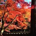 写真: 杉木立の紅葉 in 仏通寺参道