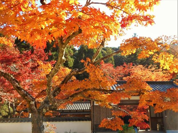古刹仏通寺の秋