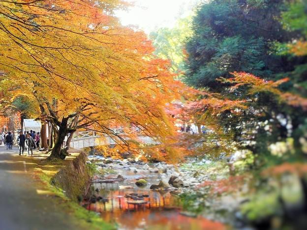 錦秋の佛通寺 参道の紅葉とせせらぎ