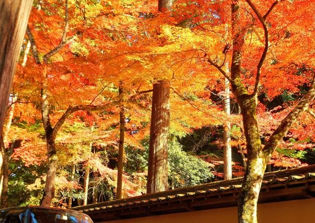 錦秋 参道の紅葉