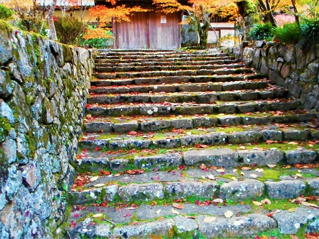 苔むす永徳院の秋