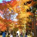 特等席の紅葉 in 大本山仏通寺