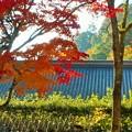 座禅道場の秋 in 大本山佛通寺