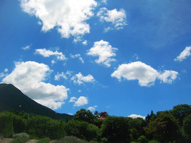 見上げれば夏~ハーブガーデンの空~