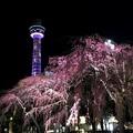 夜は華麗に桜タワー
