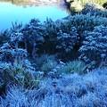 標高は2100mです、これを樹霜と言うそうです(Tさん情報)