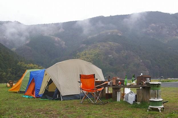 花見のキャンプ