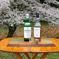 Photos: 花見ウイスキー今年はこの2種