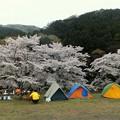 Photos: 花見キャンプ中