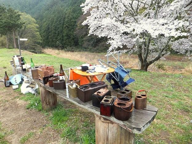 花見キャンプ
