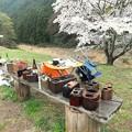 Photos: 花見キャンプ