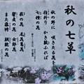 Photos: 万葉集:あきのななくさ(秋の七草、秋の七種)