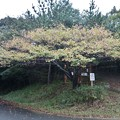 Photos: 富幕山奥山コース登山口