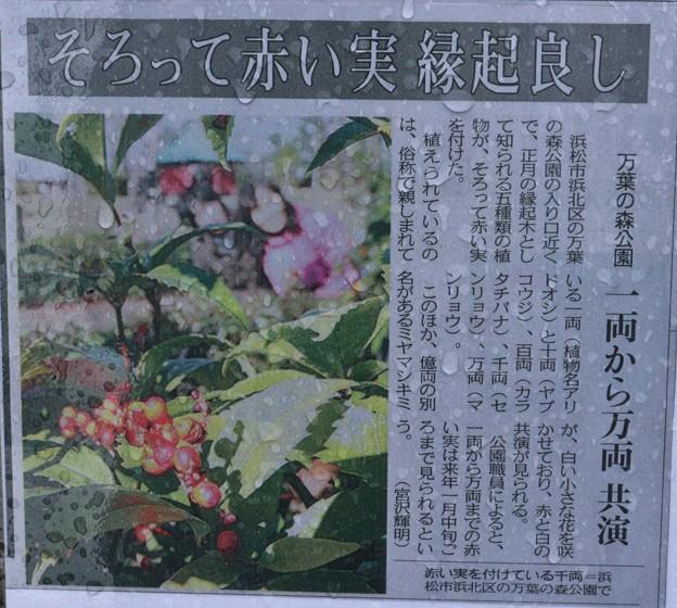 新聞に「万葉の森」正月縁起木がのりました。