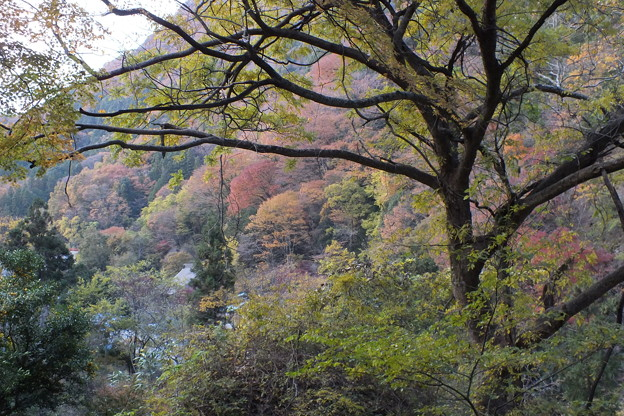 紅葉_袋田の滝 F8702