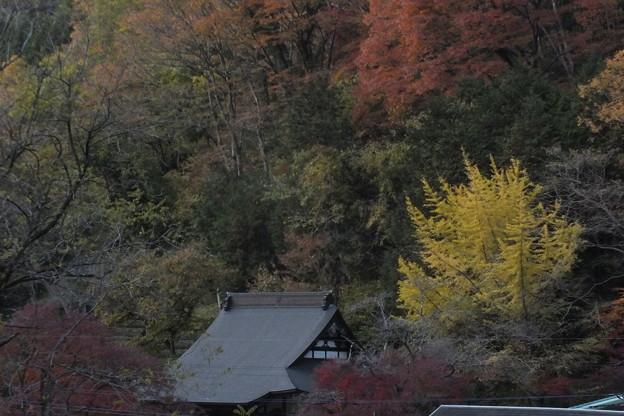 紅葉_袋田の滝 F8706