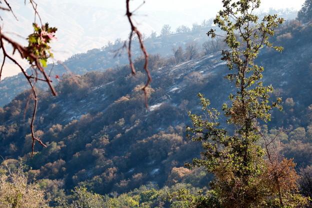 Photos: Deer Fire (19)