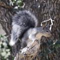 Photos: Gray Squirrel (1)