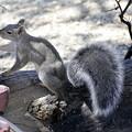 Photos: Gray Squirrel (3)