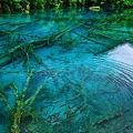 写真: 翠の波紋