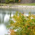 写真: 後楽園の外苑で見つけた秋色