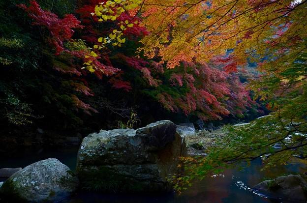 写真: あさの光を待ちわびる渓谷