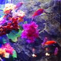 紫陽花の海1