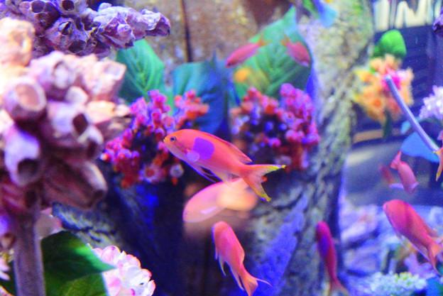 紫陽花の海4