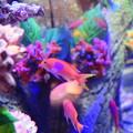 写真: 紫陽花の海4
