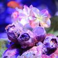 紫陽花の海5