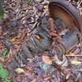 写真: 朽ちた車