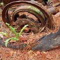 写真: 朽ちたタイヤ