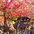 写真: 円覚寺の紅葉