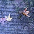 写真: 濡れ落ち葉