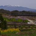 ジョイフルトレインと八ヶ岳