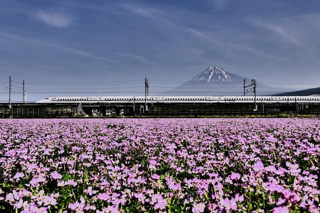 レンゲと富士山とN700系