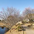 写真: 紅梅と白梅の道
