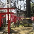 写真: 雑司ケ谷 鬼子母神堂(豊島区)