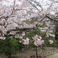15.04.03.鶴岡八幡宮(鎌倉市)