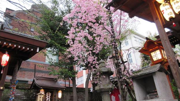 Photos: 15.04.06.菅原院天満宮神社(京都市上京区)