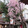 15.04.06.菅原院天満宮神社(京都市上京区)