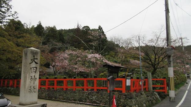 15.04.07.大田神社・大田ノ沢のカキツバタ群落(北区)